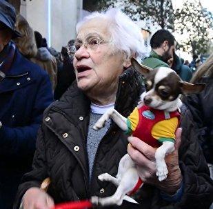 Los animales españoles celebran el día de San Antón