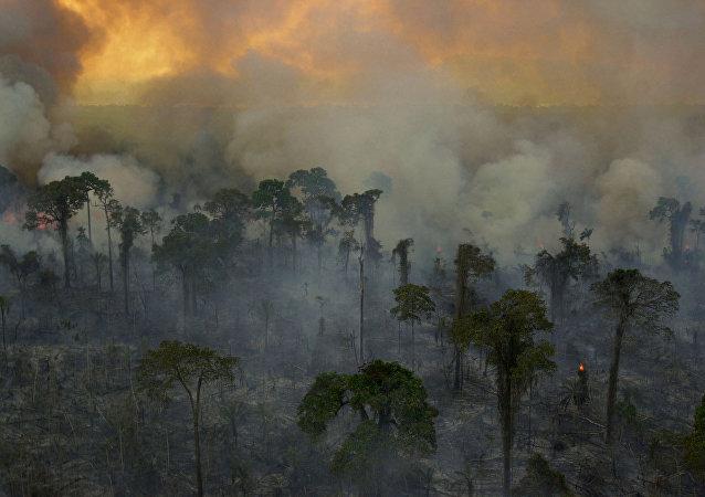 Incendios forestales en la Amazonía brasileña (archivo)