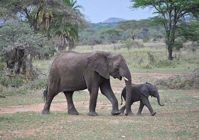 Elefantes (imagen referencial)