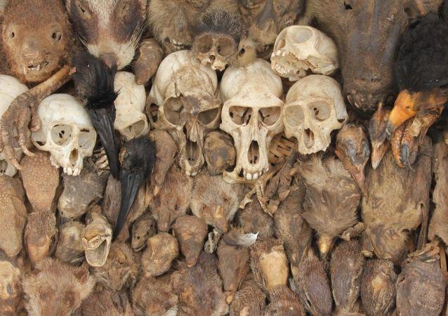 Cabezas y colas: los tesoros del principal mercado de vudú del mundo