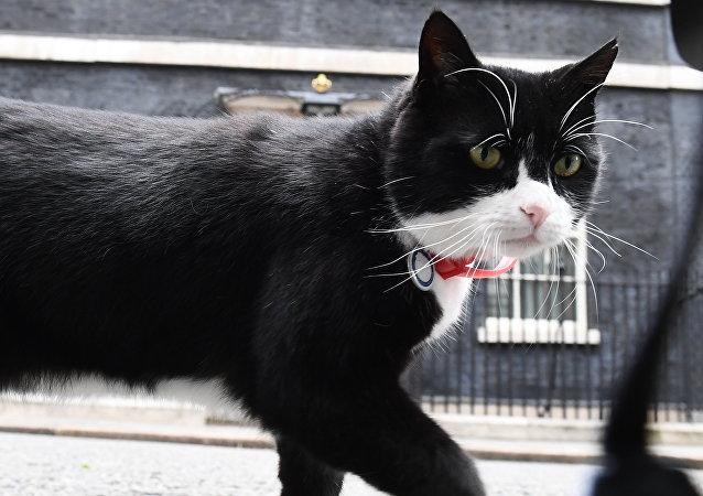El gato Palmerston