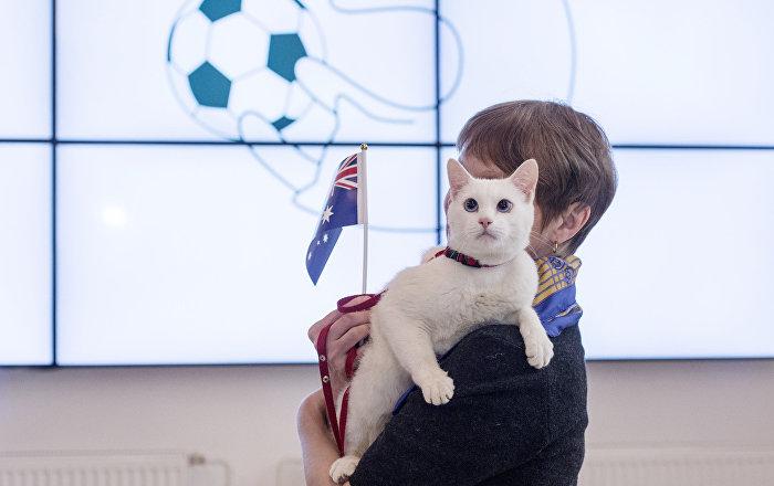 El gato Aquiles (archivo)