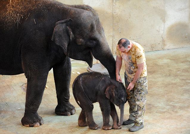 Los elefantes en el zoológico en Rostov del Don
