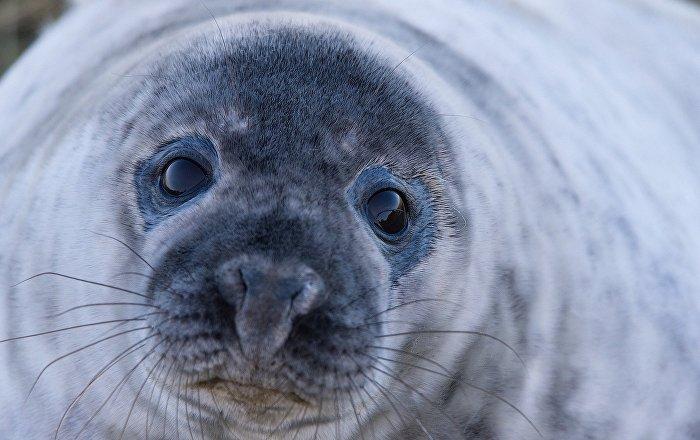 Una foca