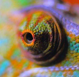 Un camaleón