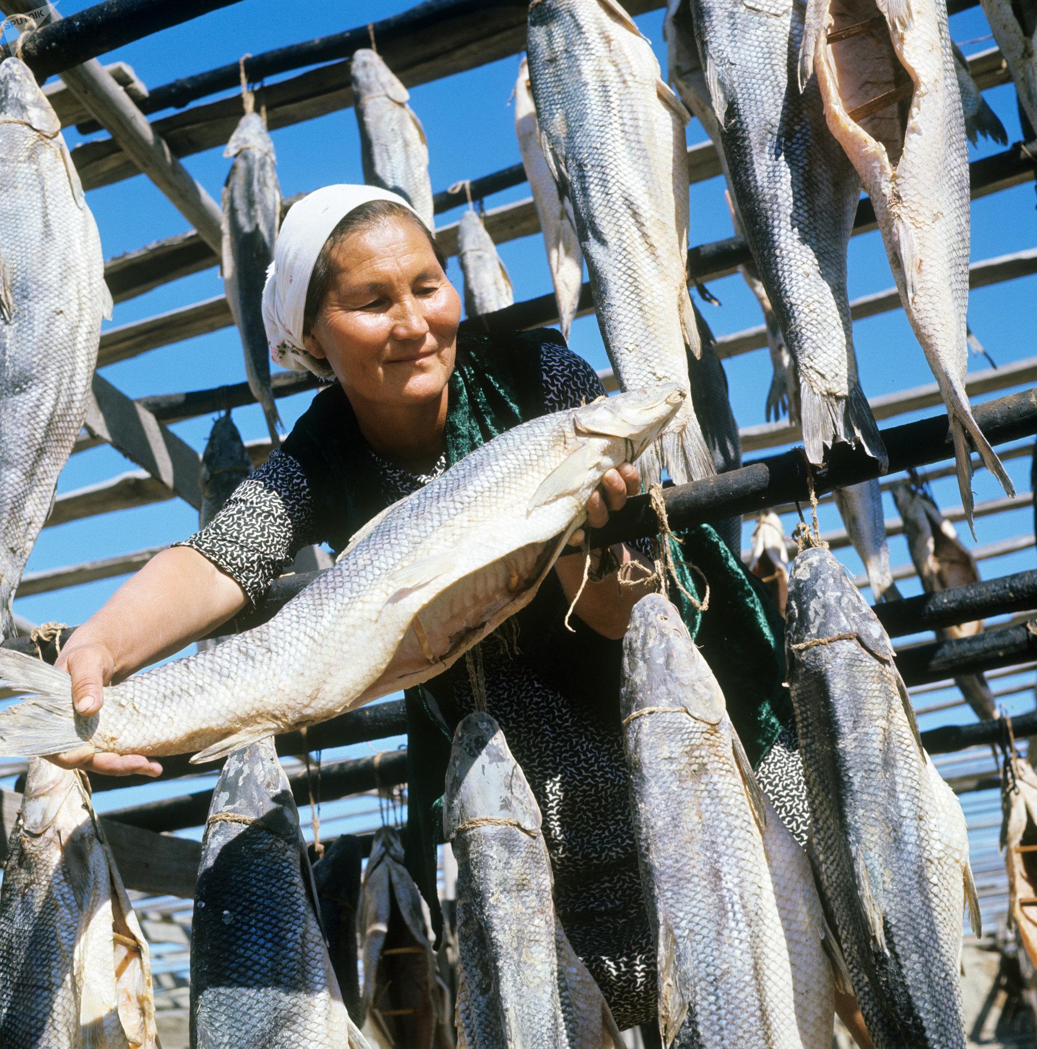 Pescado secado del mar de Aral en la década de los 60