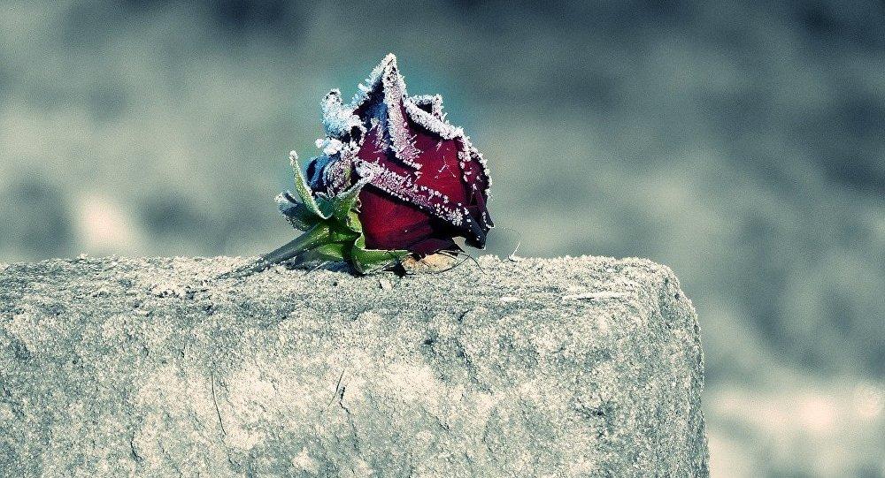 Una flor en una tumba