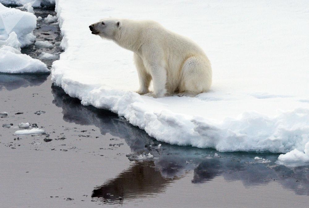 Peligro de extinción: los majestuosos integrantes del Libro Rojo de Rusia