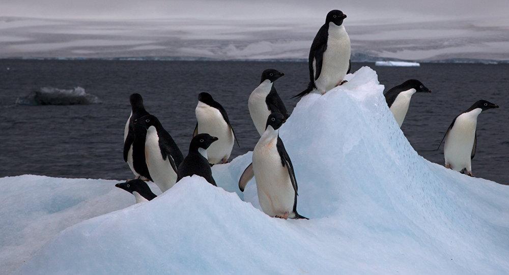 Descubren ciudad con más de 1.5 millones de habitantes en la Antártida
