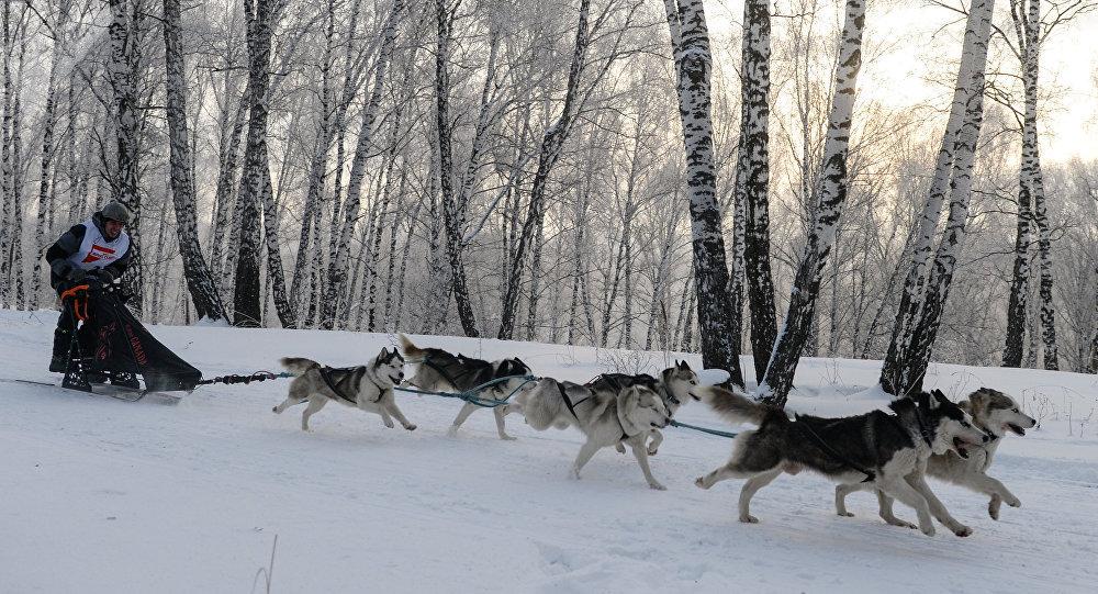 Un trineo tirado por perros