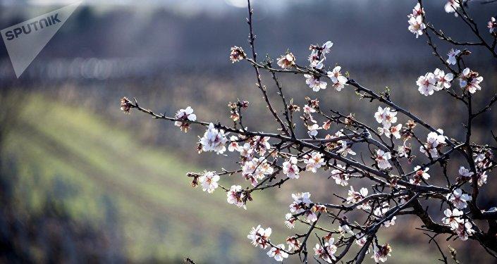 Primavera en Crimea, Rusia (imagen referencial)