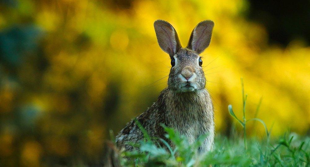 Un conejo (archivo)