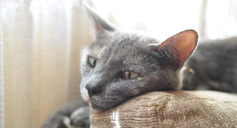 Un gato triste