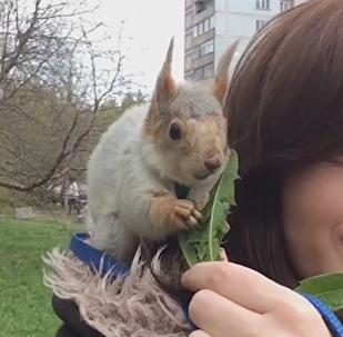 La vida de la tierna ardilla que encontró una nueva familia en Novosibirsk