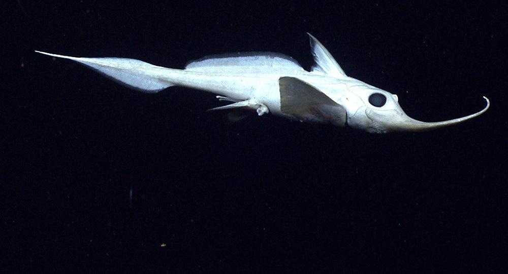 Un pez abisal