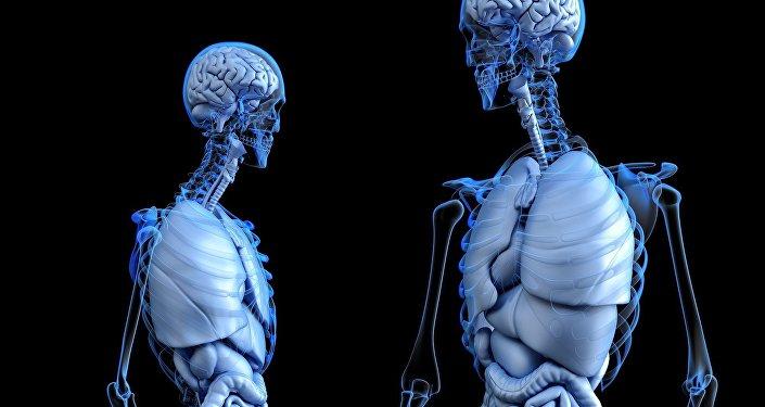 Cuerpo humano (imagen referencial)