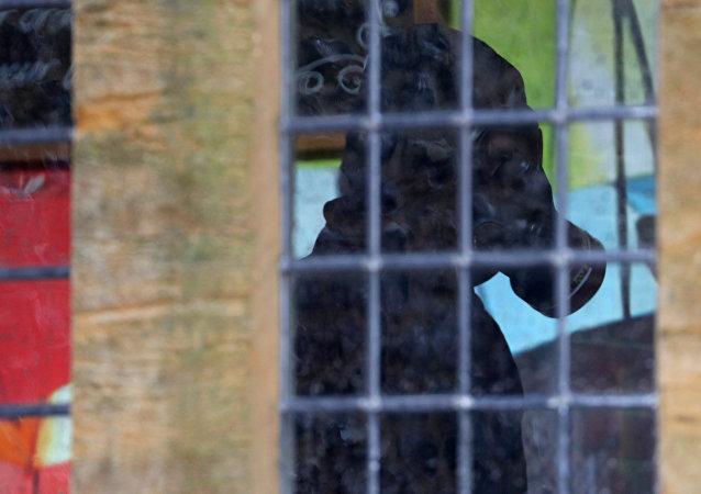 Un miembro de la unidad forense británica inspecciona el pub The Mill, en Salisbury, Reino Unido