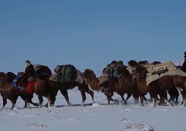 Ulán Bator – Londres: 12.000 kilómetros en camello
