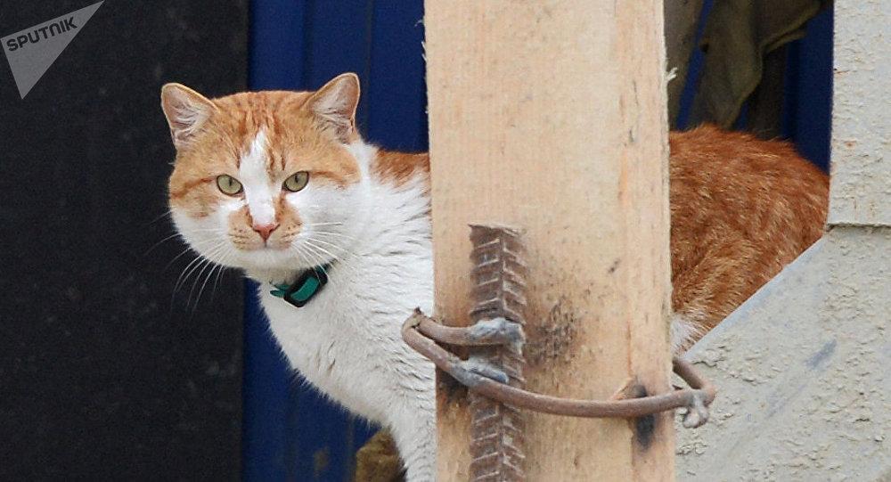 El gato Móstik, la mascota del puente de Crimea