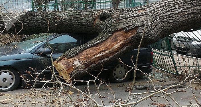 Un árbol derribado, foto de archivo