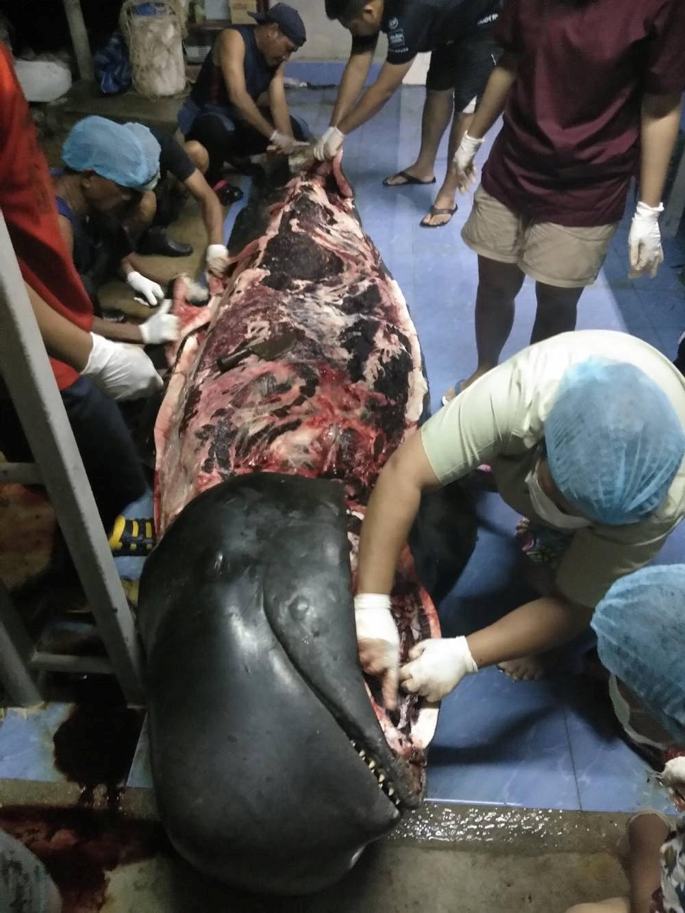 La ballena tenía el estómago lleno de plástico