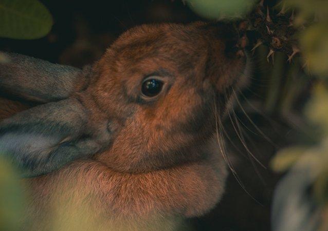 Un conejo (imagen referencial)