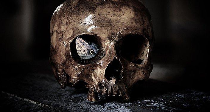 Un cráneo