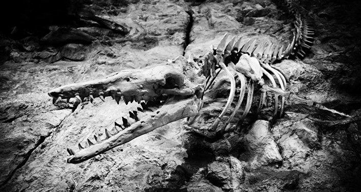 Los restos de un animal prehistórico