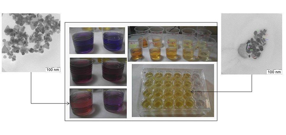 El experimento científico que muestra la influencia de diferentes características de las nanopartículas de plata en embriones de pez cebra
