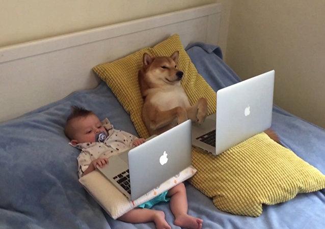 Los perros, mejores amigos de los bebés