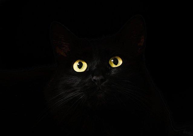 Un gato negro (archivo)
