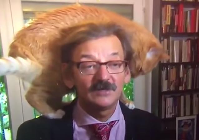 Un gato interrumpe la entrevista a un politólogo polaco y le roba el protagonismo