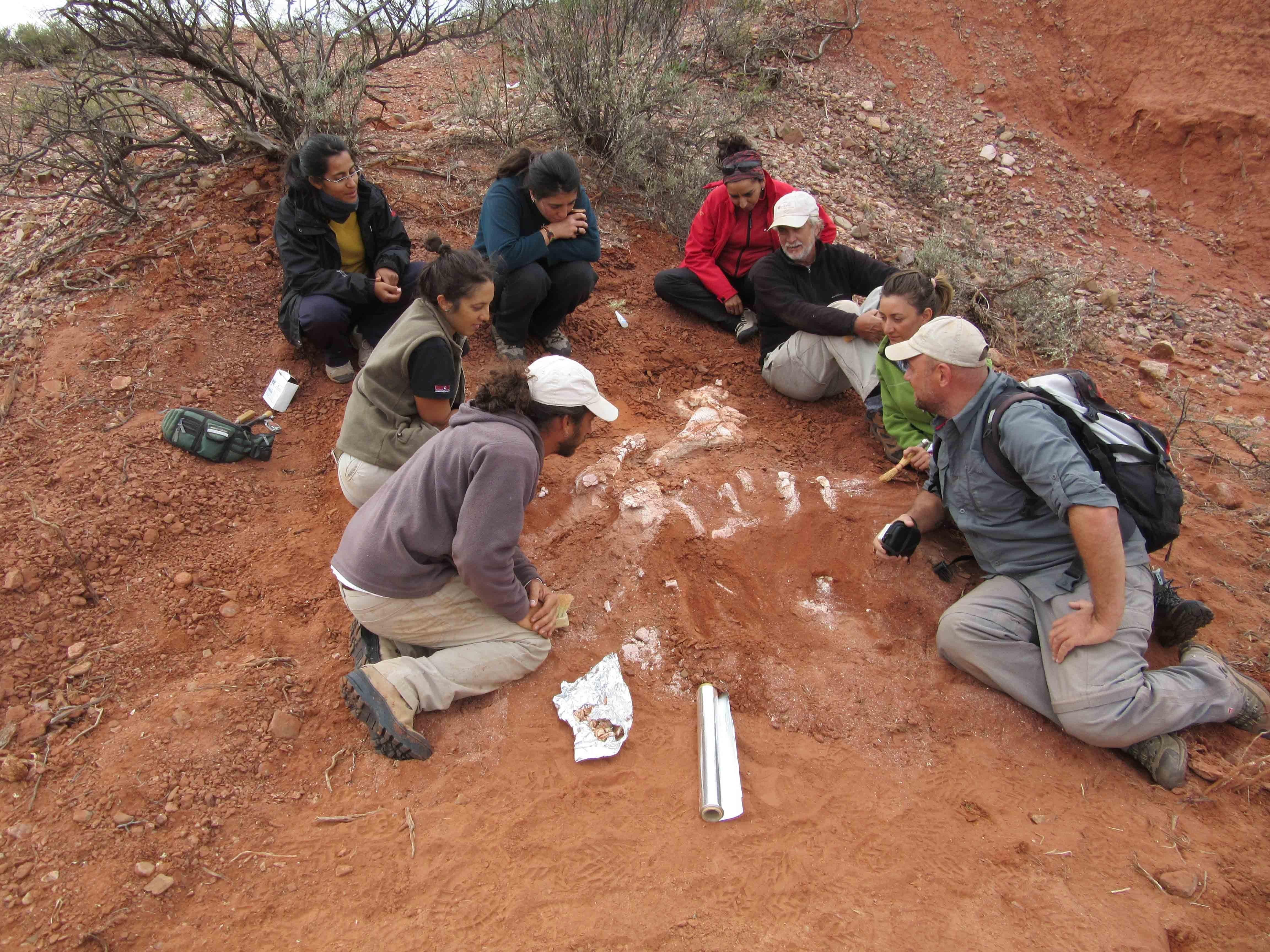 Investigadores argentinos desentierran fósiles del dinosaurio gigante más antiguo conocido hasta el momento, San juan, Argentina