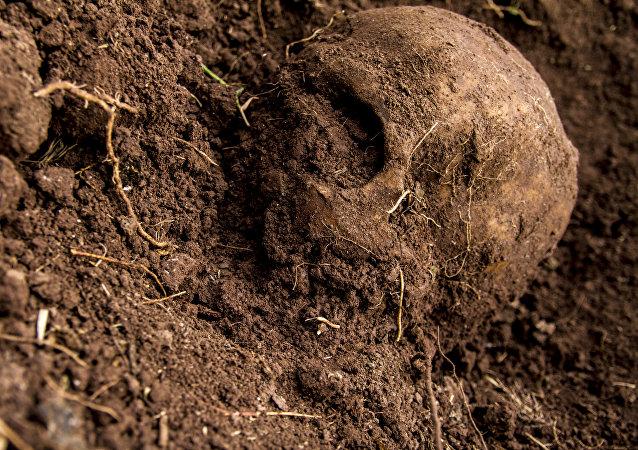 Cráneo hallado en una fosa clandestina, durante las búsquedas de familiares en el estado de Sinaloa, México