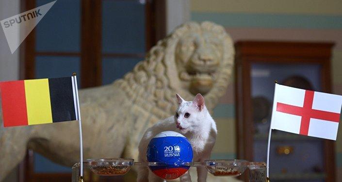 El gato oráculo del Hermitage hace sus predicciones del partido por el bronce