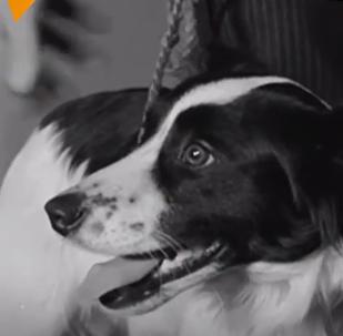 Pickles, el perro que salvó el Mundial