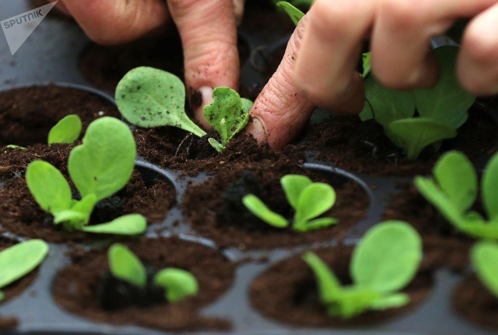 Sector agrícola inteligente: alimentar al mundo con el uso de nuevas tecnologías