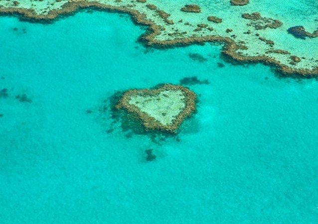 Corales (imagen referencial)