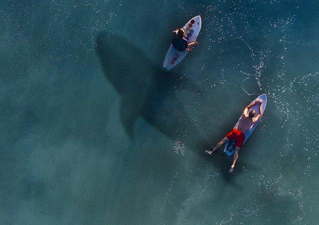 Un tiburón en el agua, imagen referencial