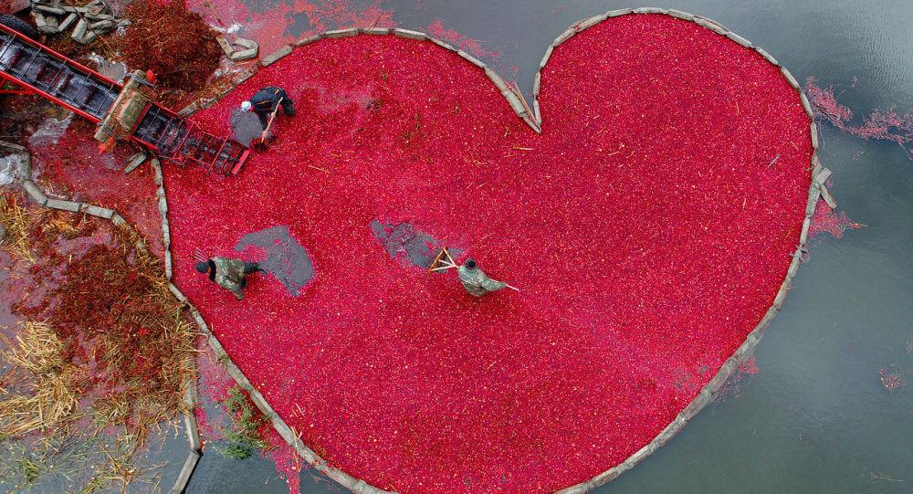 'Corazón de arándano rojo', foto del ganador del Concurso Internacional de Fotoperiodismo Andréi Stenin de 2018 en la categoría 'Mi planeta', Serguéi Gapon