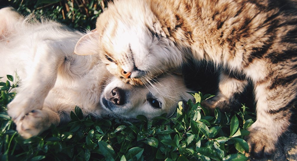 Un perro y un gato (imagen referencial)