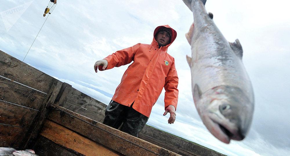 Pesca del salmón (imagen referencial)