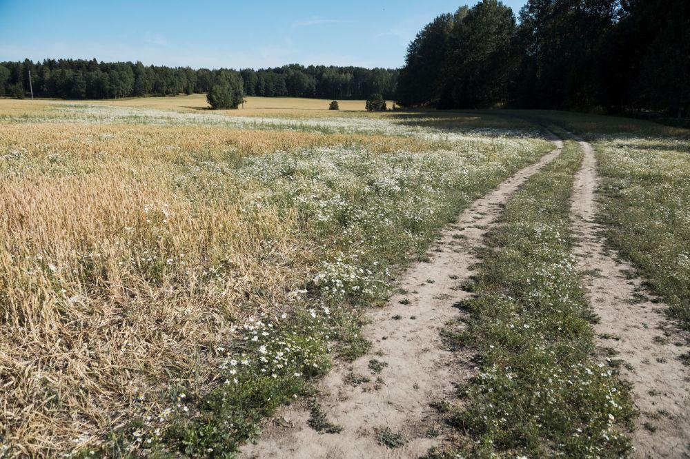 La sequía abrasa el mundo