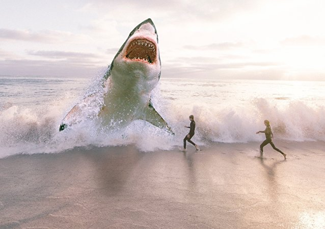 Un tiburón, imagen ilustrativa