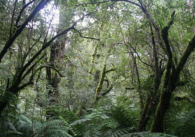 Bosques de Australia (imagen referencial)