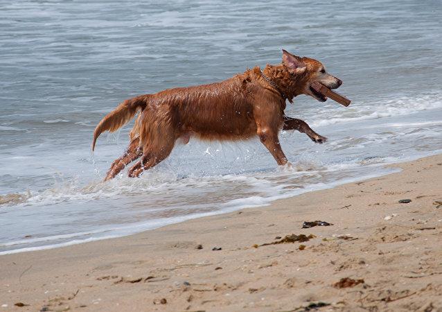 Un perro a orillas del mar