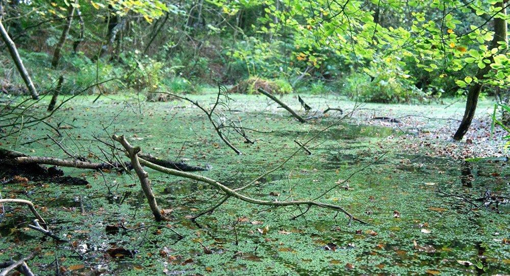 Un pantano (imagen ilustrativa)