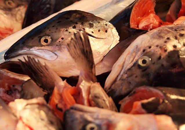 Pescado, imagen referencial
