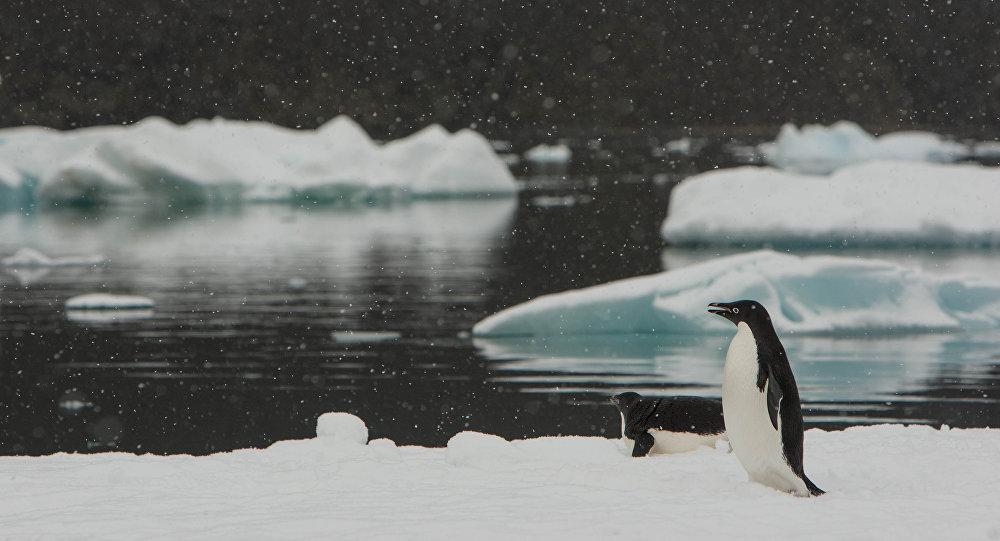 Los pingüinos Adelia en Antártida (imagen referencial)