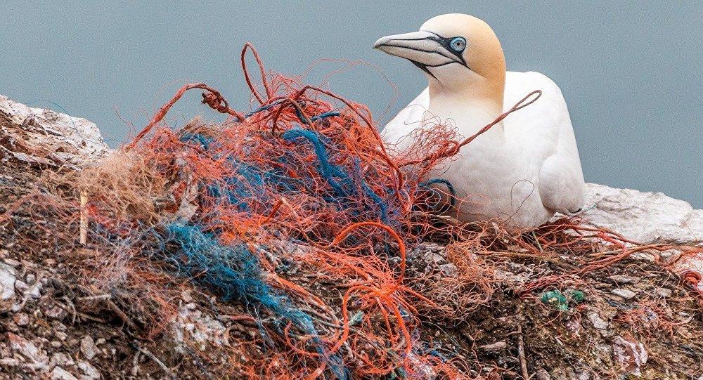 Ave marina junto a residuos plásticos